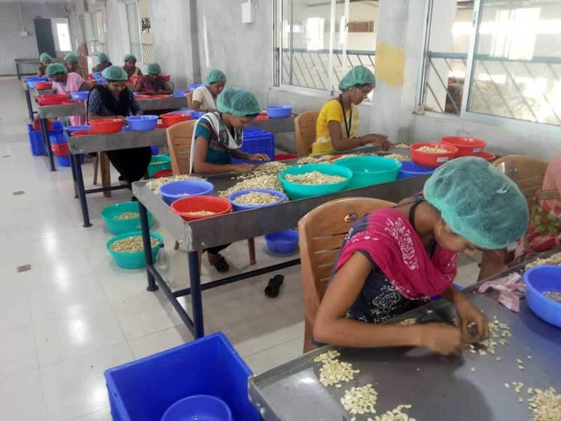 cashew_factory5