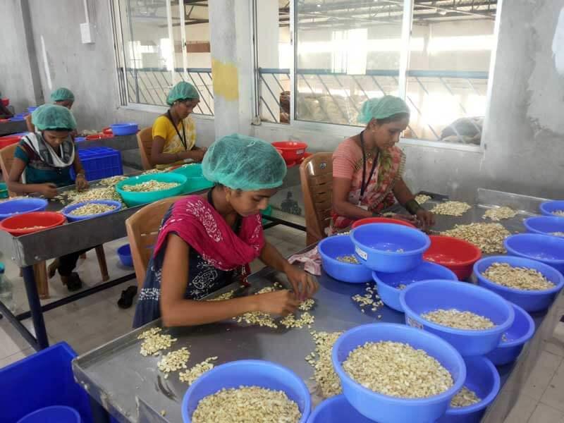 cashew_factory7